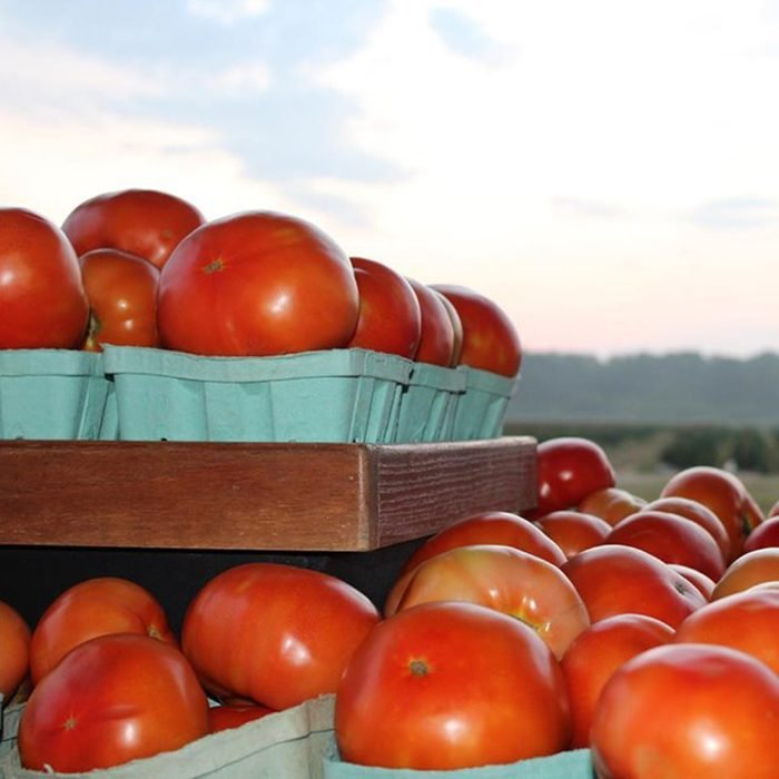Tomatoes on shelves against a sky background