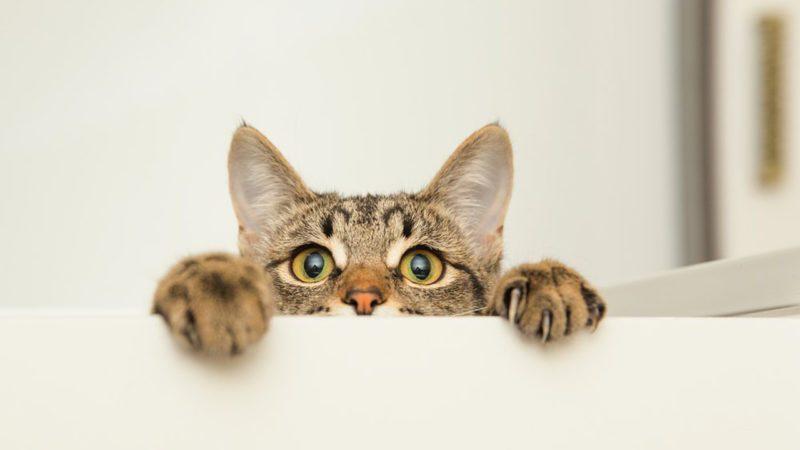 Young curious cat