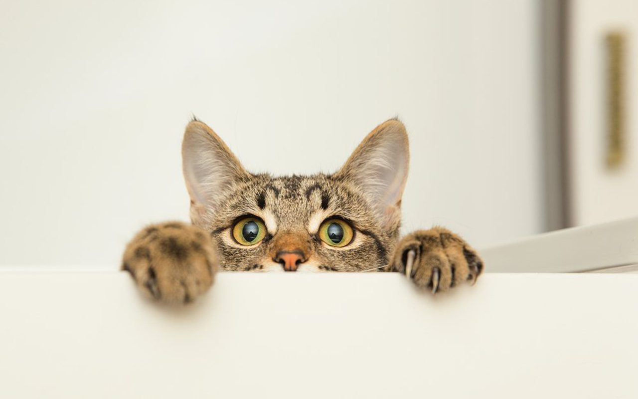 Why Are Cats Afraid Of Cucumbers Here S The Reason Reader S Digest