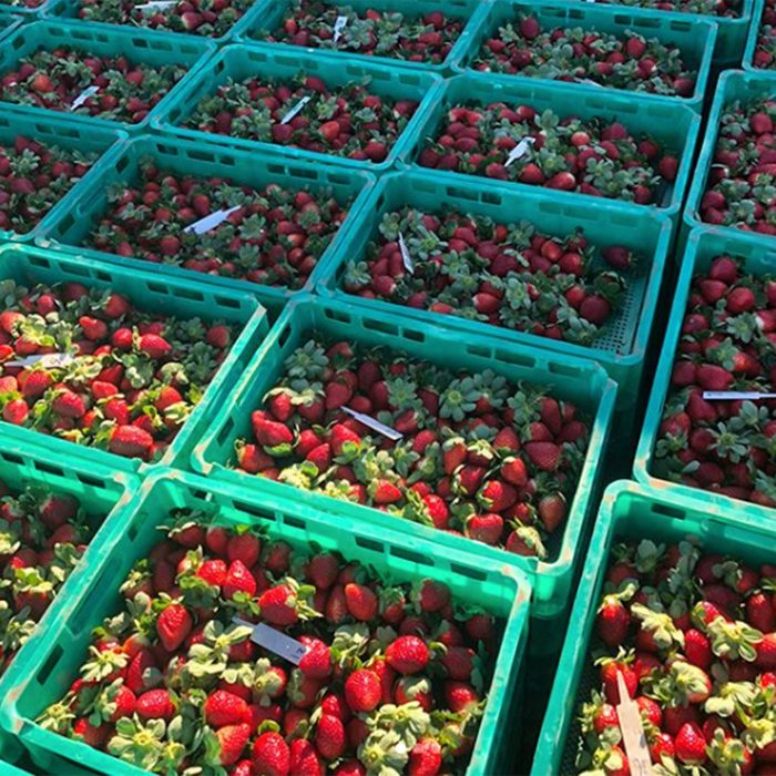 Berry Patch Farms