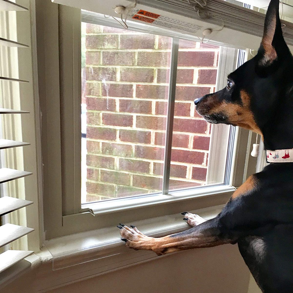 Clear Pet Window Sill Protector - Guards Against Dog Claws