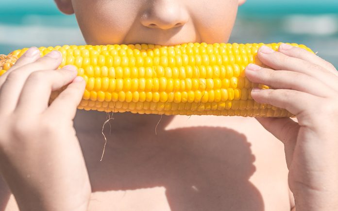 Child on summer beach - a lovely boy eat a cob of boiled corn