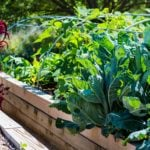 10+ Tips to Help You Grow a Great Raised Bed Garden