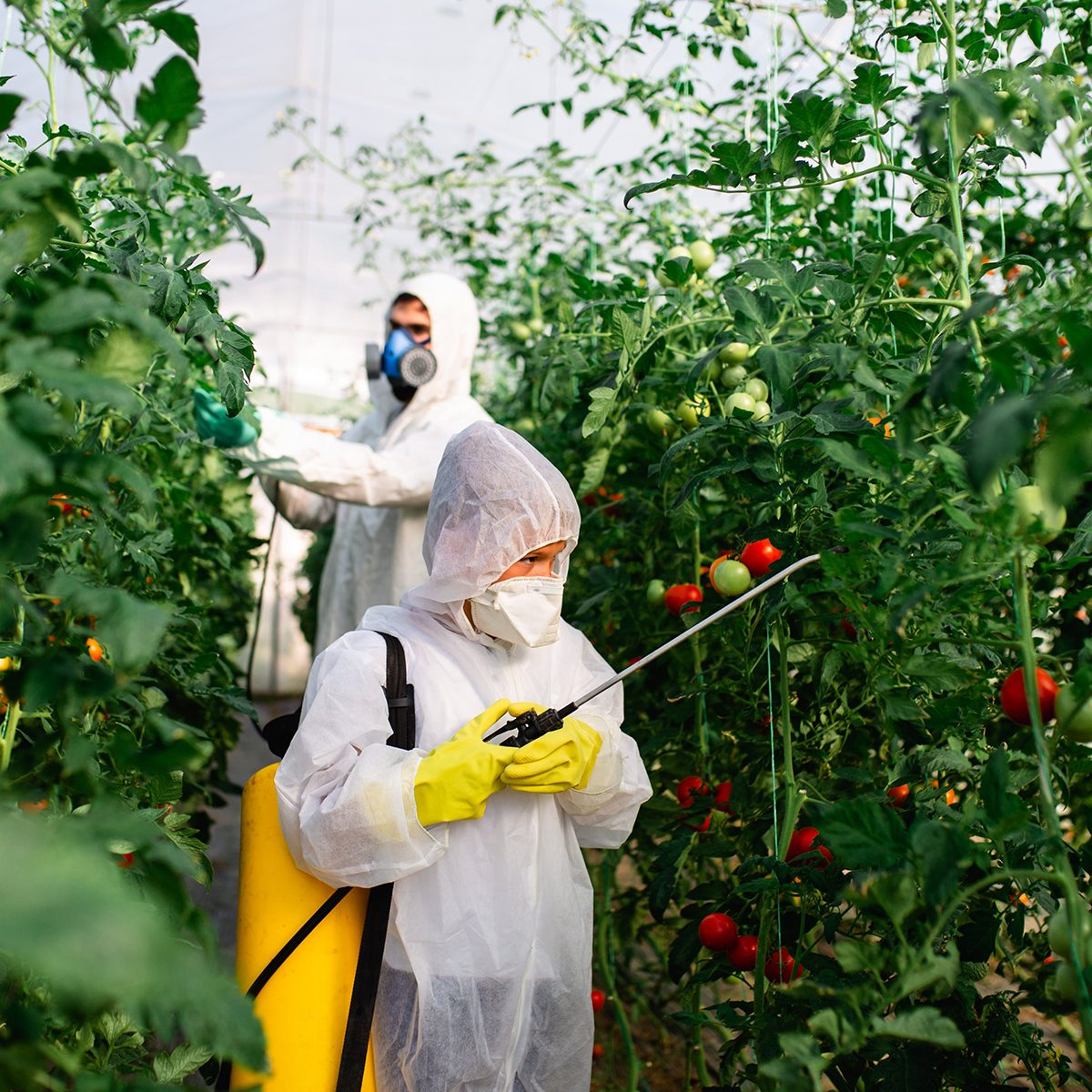 Spraying field of plants