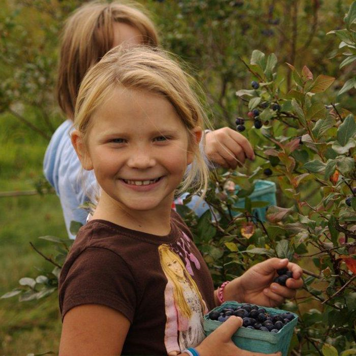Two young kids picking blueberries