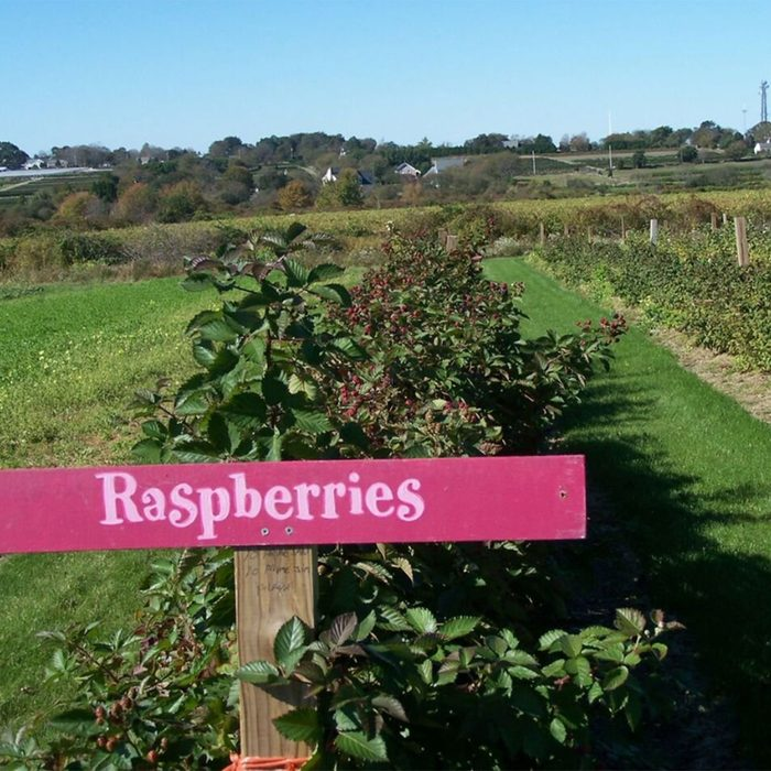 Sweet Berry Farm raspberries
