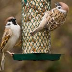 The Best Foods in Your Kitchen to Attract Backyard Birds