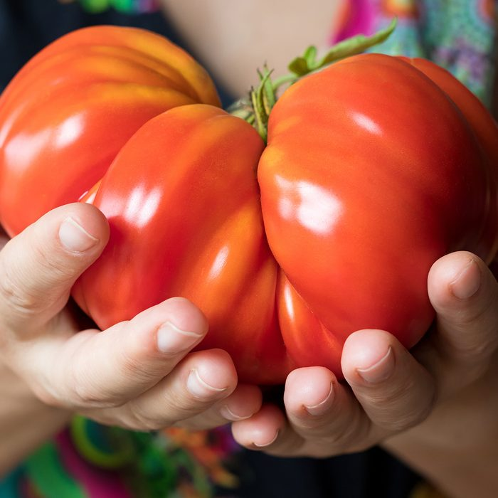 Hands holding and offering a giant Zapotec pleated heirloom tomato; Shutterstock ID 691743028; Job (TFH, TOH, RD, BNB, CWM, CM): Taste of Home