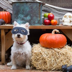 6 Halloween Pet Safety Tips to Keep Your Dog Safe