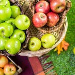 Freshly picked organic apples on the farm.