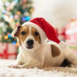 7 Things Every Pet Owner Should Know Before Hosting a Holiday Party