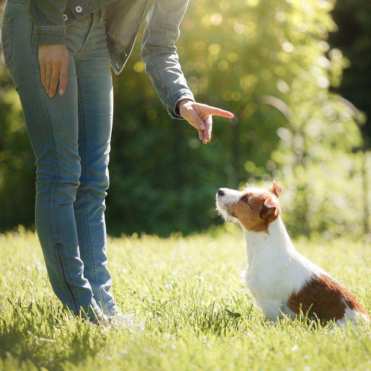 Human teaching their puppy a trick in a field