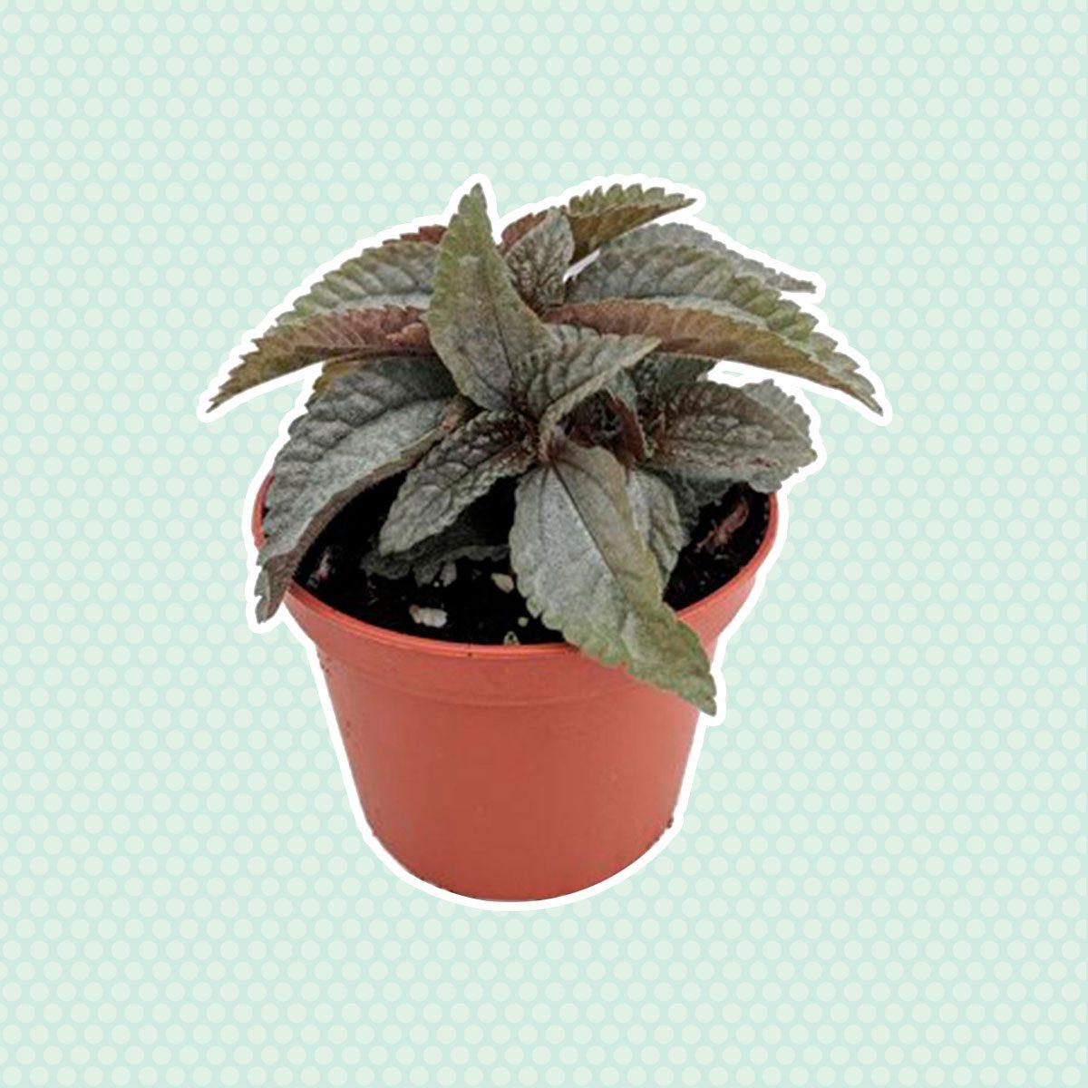 Friendship plant