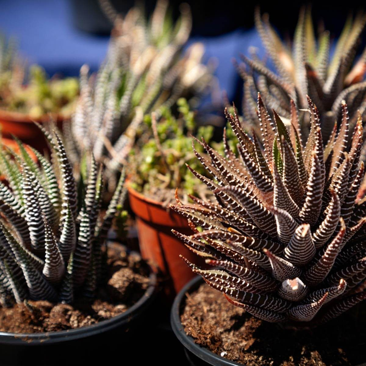 Move Plants Away From Windows on Freezing Nights