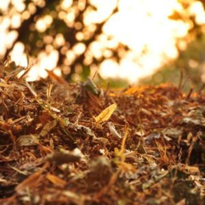 50 Must-Do Things to Get Your Home Ready for Fall