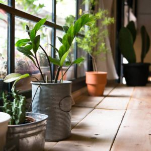 14 Tips for Caring for House Plants Through Winter