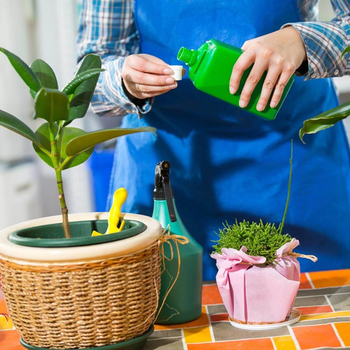 Avoid or Dilute Fertilizer