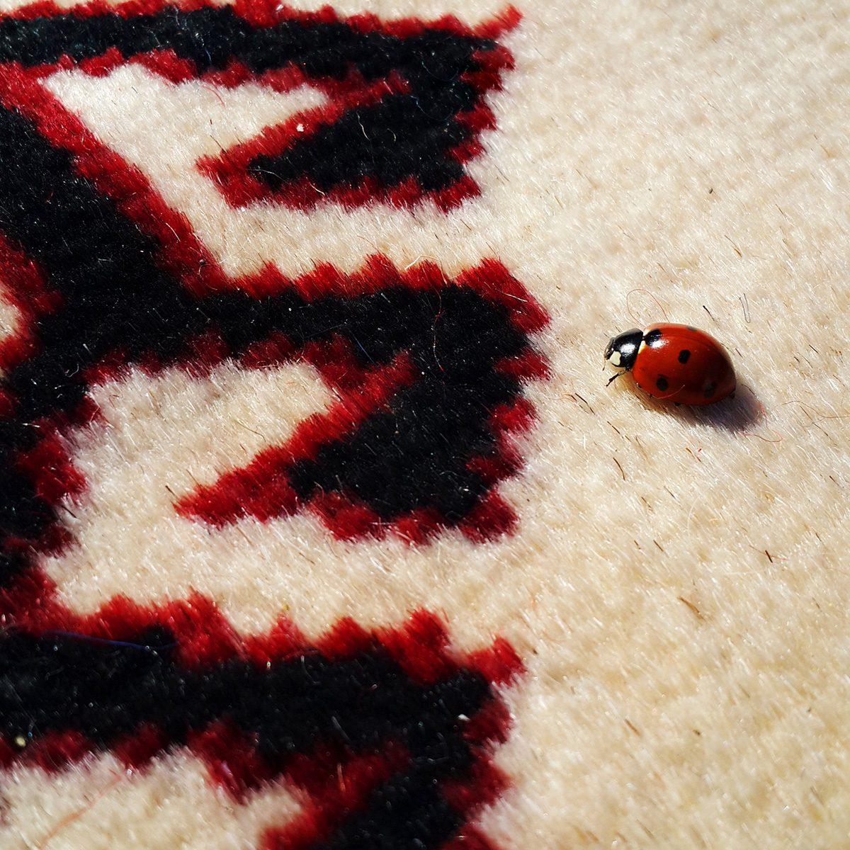 lady bug on rug