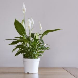 11 Air-Purifying Plants for a Healthy Home