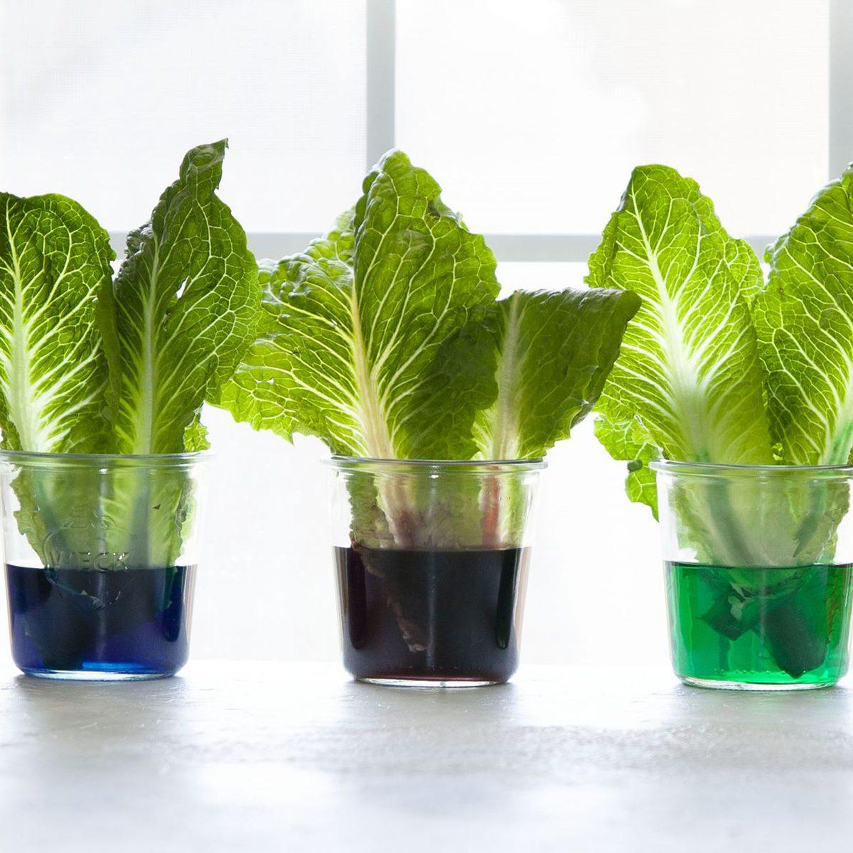 How plants eat experiment