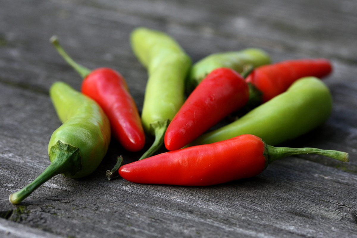 Red and green bird's eye chili peppers on an old wooden grey garden table