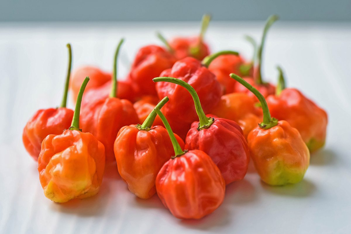 Red hot chilli peppers called Scotch Bonnet on white background.