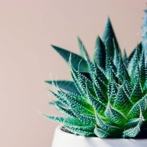 10 Non-Toxic Houseplants That are Safe for Your Pets