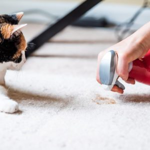 9 Cleaning Products Perfect for Anyone Who Has Pets