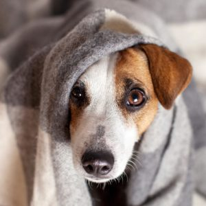 How to Know If Your Pet Has Food Poisoning