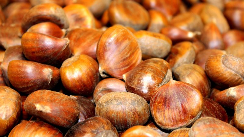 Organic Chesnut Photo; Shutterstock ID 781568851; Job (TFH, TOH, RD, BNB, CWM, CM): Taste of Home