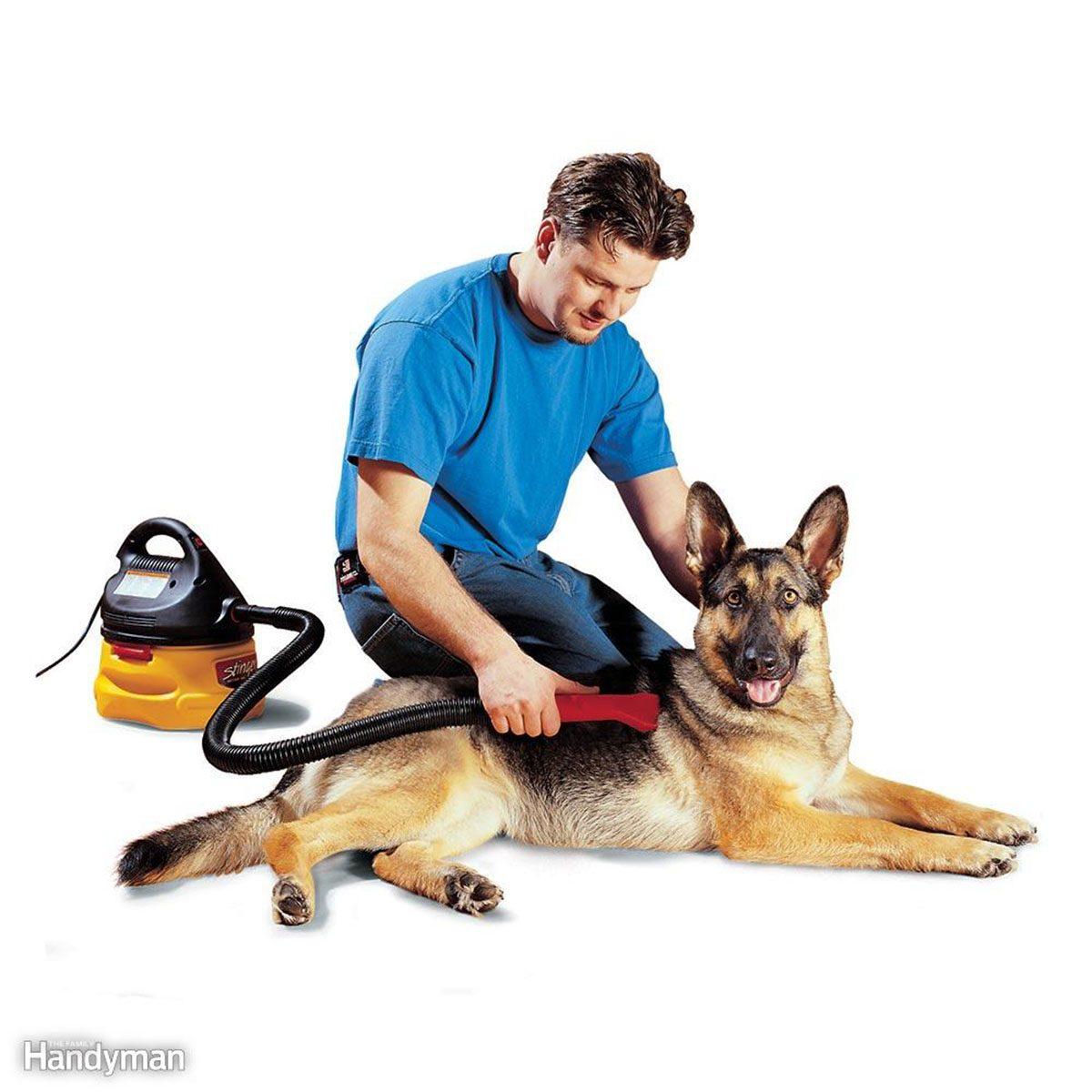 Man vacuuming german shepard's fur