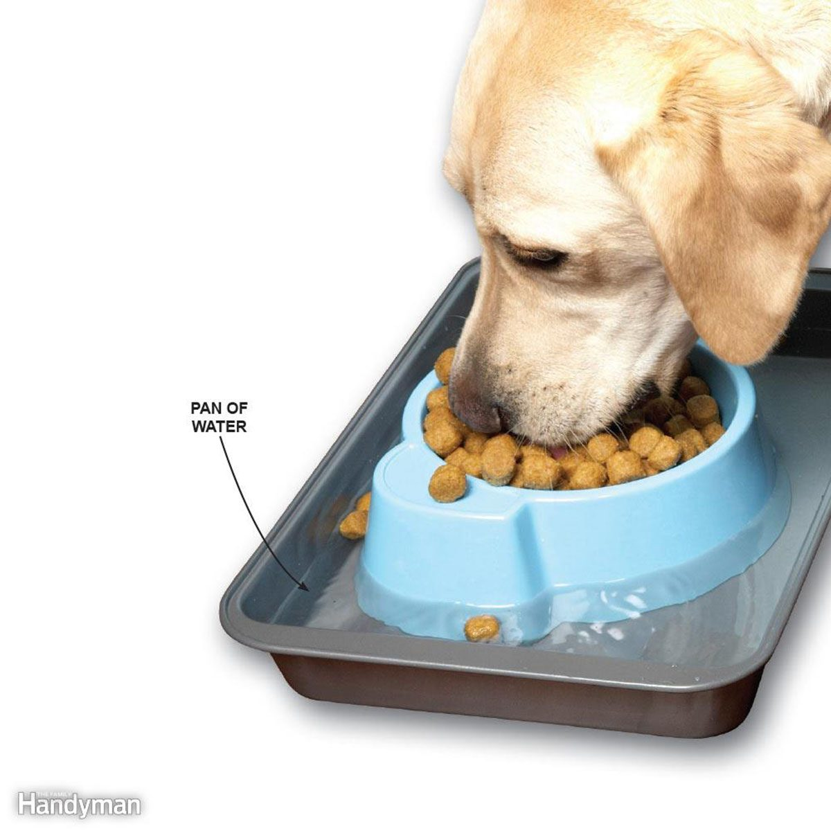 Dog eating food from a dish in a tray of water