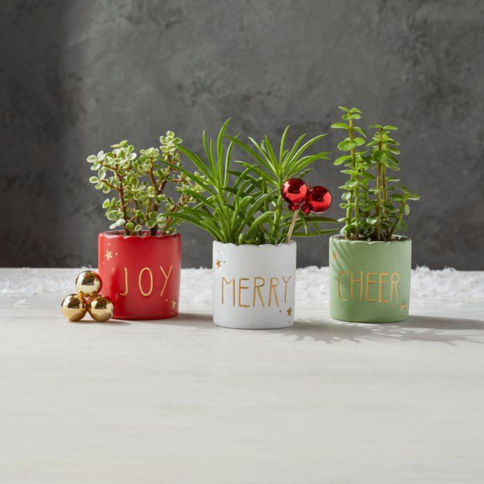 Mini Holiday Succulents