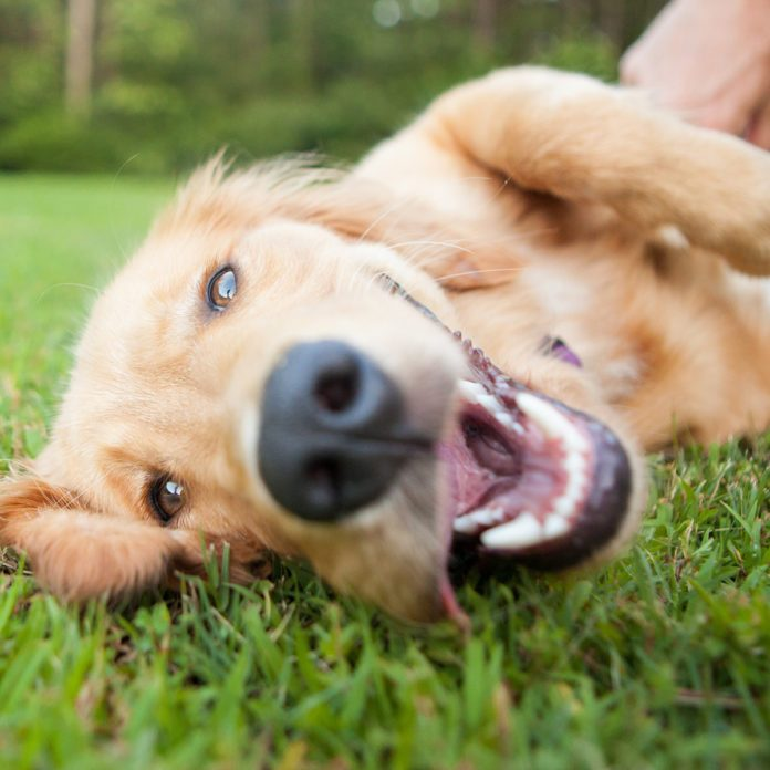 Why Your Dog Has Bad Breath—And How to Get Rid of It