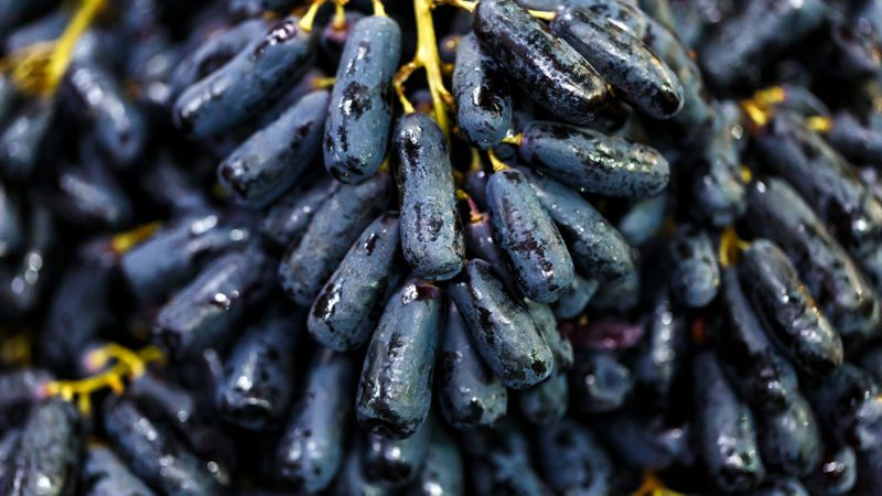 close up black seedless Moon Drops grape or Witch Fingers grape; Shutterstock ID 1136246546; Job (TFH, TOH, RD, BNB, CWM, CM): Taste of Home