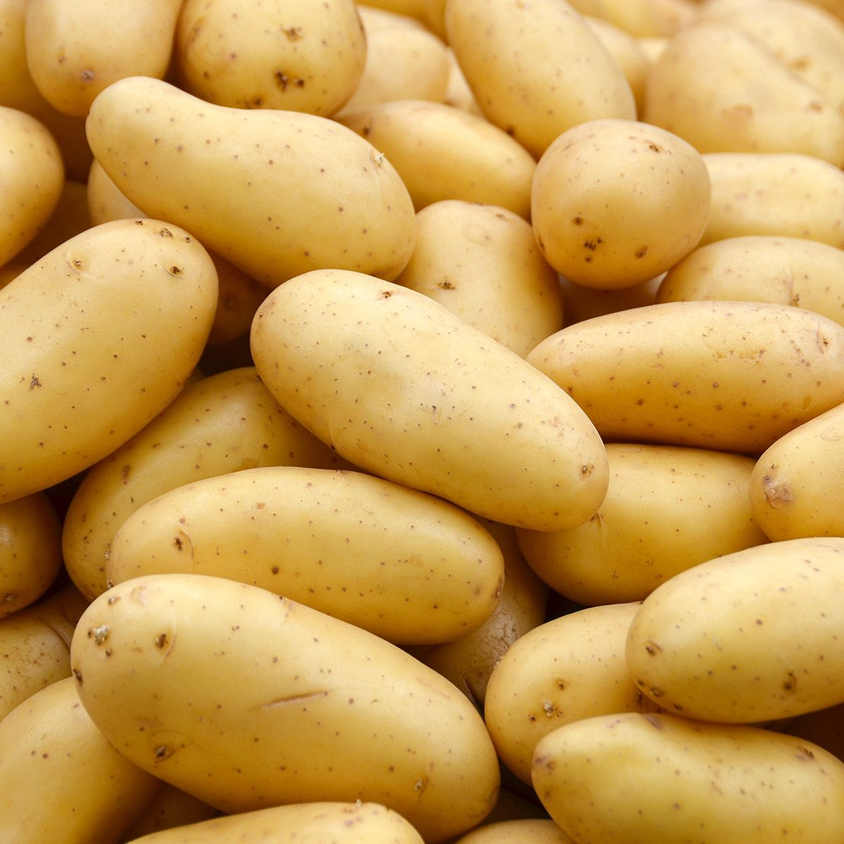 Potatoes background. ; Shutterstock ID 346577078; Job (TFH, TOH, RD, BNB, CWM, CM): Taste of Home