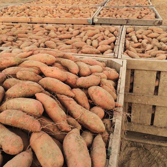 sweet potatoes,Lindsey Edmondson/Farm & Ranch Living