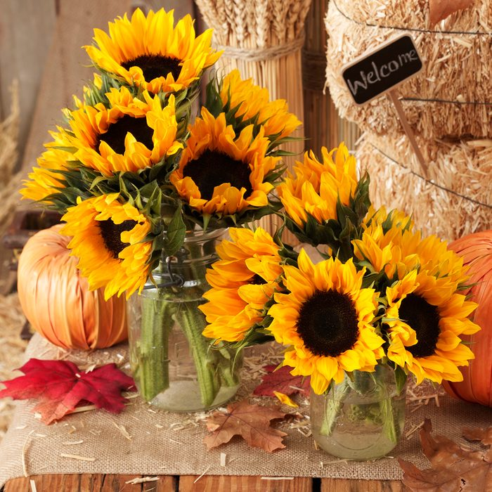 fall, thanksgiving sun flowers