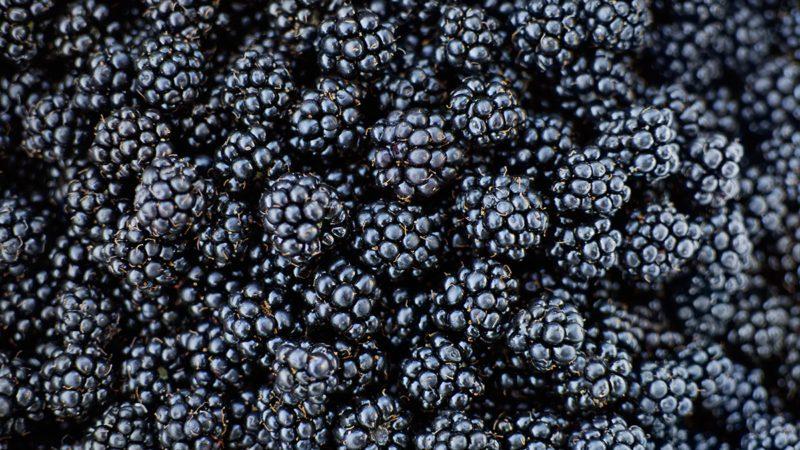 Fresh Ripe Blackberries