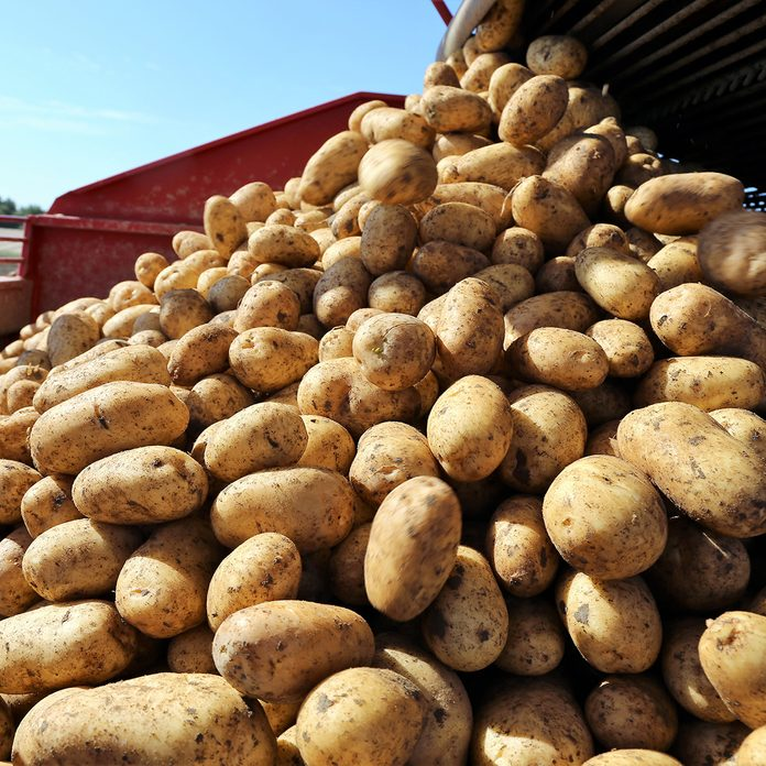 Agricultural potato harvest; Shutterstock ID 1138398596; Job (TFH, TOH, RD, BNB, CWM, CM): Taste of Home