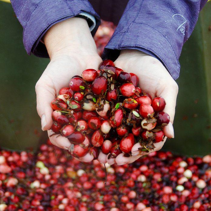 Wisconsin Cranberry Bog; Shutterstock ID 1366840553; Job (TFH, TOH, RD, BNB, CWM, CM): Taste of Home