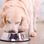 The Best Dog Food Brands Veterinarians Feed Their Own Pets