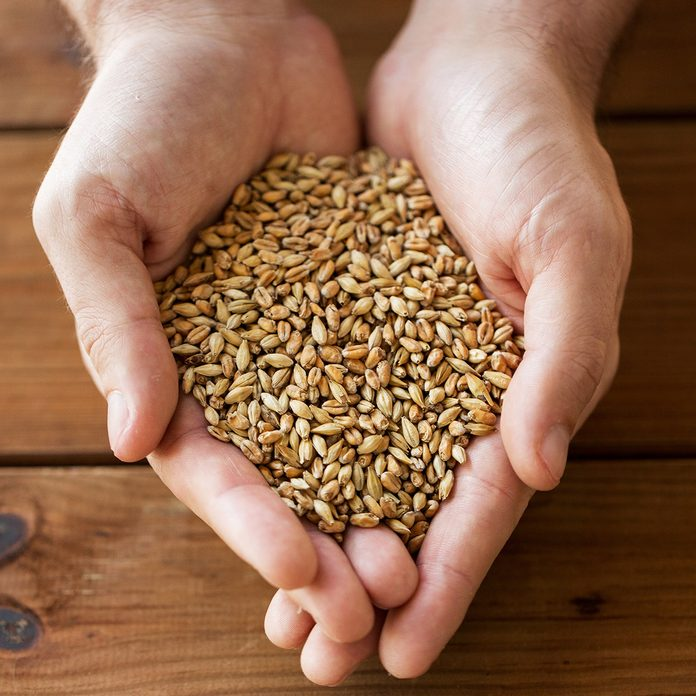 agriculture, farming, prosperity, harvest and people concept - close up of male farmers hands holding malt or cereal grains; Shutterstock ID 505402426; job: Taste of Home