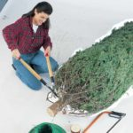How to Keep Your Christmas Tree Alive Throughout the Holiday Season