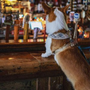 The Best Dog-Friendly Bars and Restaurants Across America