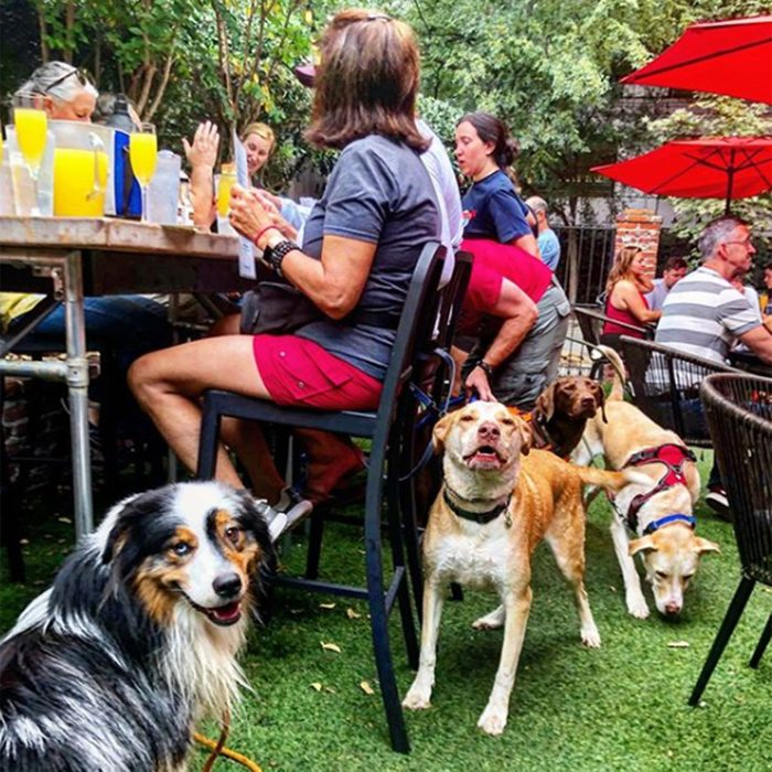 Dogs sitting around an outdoor table
