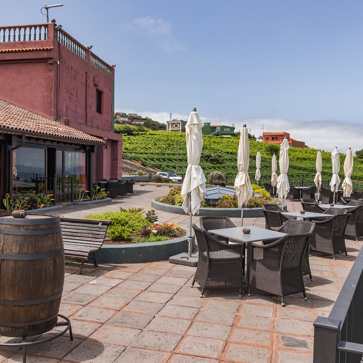 View of wine cellar and vineyards in the north of Tenerife, Canary Islands Spain. Harvest concept
