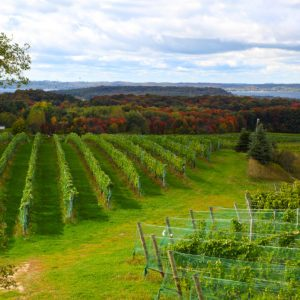 The Best Places to Drink Wine That Aren't California