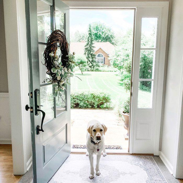 Dog on entryway rug