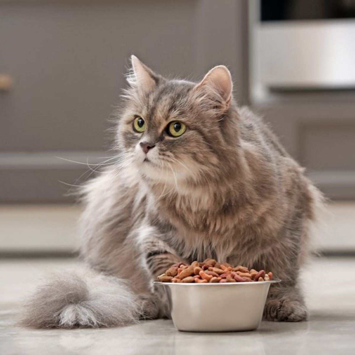 Long haired cat sitting behind a full food bowl